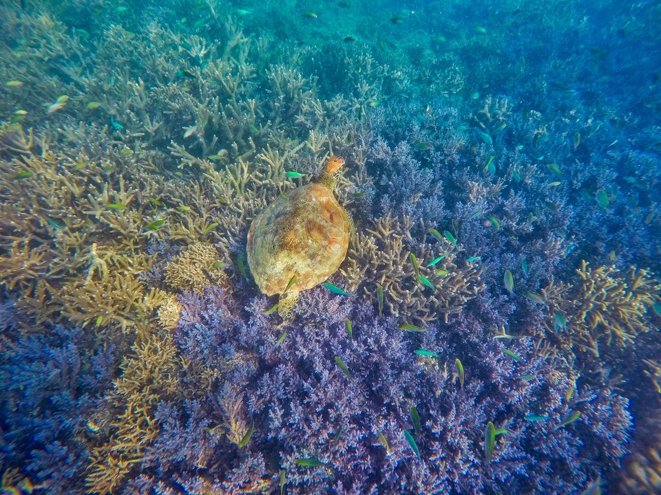 noumea coral and fish