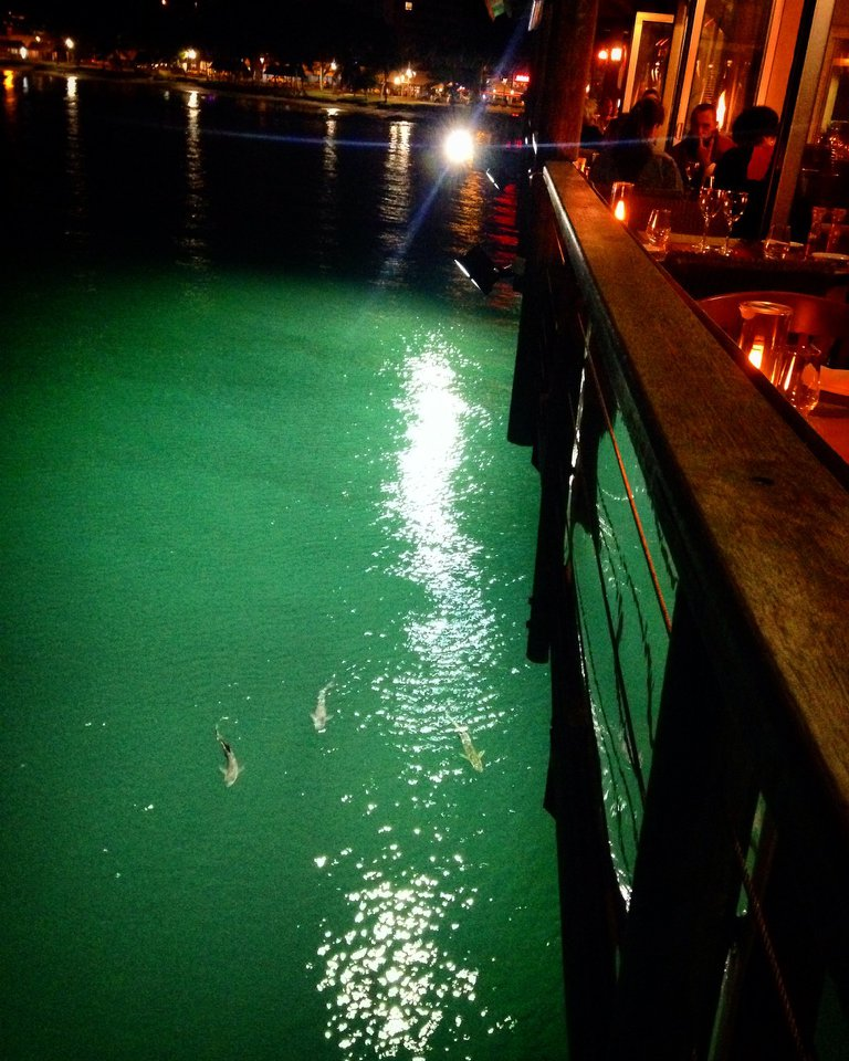 sharks at Le Roof restaurant