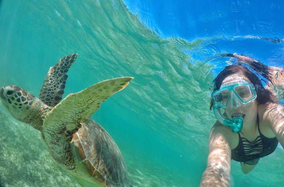 snorkelling turtle