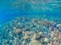 snorkelling blue fish